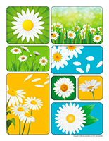 Stickers-Daisies