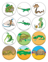 Story and memory game-Reptiles-2