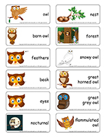 Word flashcards-Owls