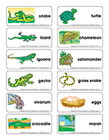 Word flashcards-Reptiles