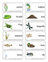 Word flashcards-Swamps
