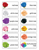 Word flashcards-Valentine's Day Roses