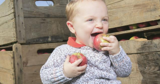 Different ways to explore an apple orchard - Extra activities - Educatall
