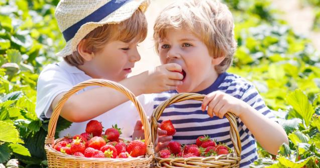 "Learn how to say ""strawberry"" in French"